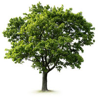 Tree Care Daventry