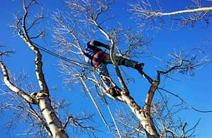 Tree Care Milton Keynes