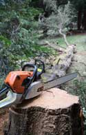 Tree Removal St Austell