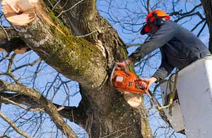 Tree Surgeon Hedge End