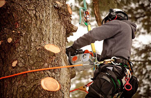 Tree Surgeons Bishop Auckland