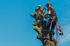 Tree Care Falkirk