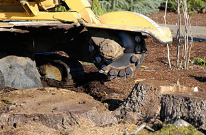 Stump Grinding Westgate-on-Sea