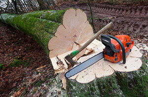 Tree Care Chipping Ongar