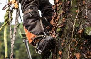 Identifying a Tree Surgeon Near Me Exmouth (EX8)