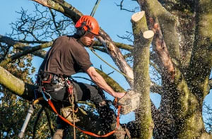 Tree Surgeons Aylesbury (HP18 to HP21)