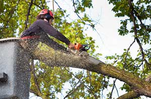 Tree Surgery Exmouth (01395)