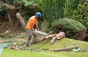 Tree Surgeon Milton Keynes Buckinghamshire