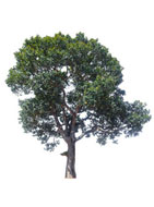 Ways to Find a Tree Surgeon Near Me Rhyl (LL18)