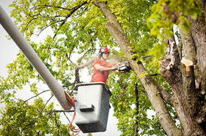 Tree Surgeon Chipping Ongar