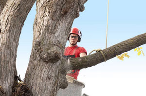 Tree Surgeons Chipping Ongar (CM5)