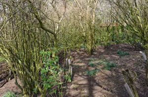 Woodland Clearance Aylesbury (HP18 to HP21)